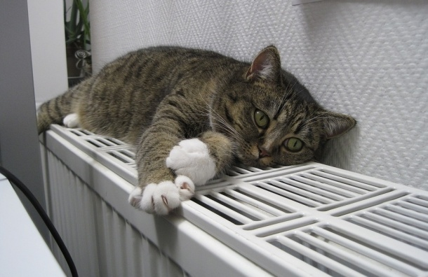 Тепло получили 96% домов Петербурга