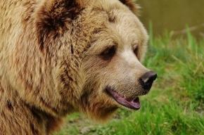 Хмельная медведица уснула рядом с сараем под Хабаровском