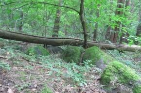 Избавиться от тела жены петербуржец решил в городском лесу