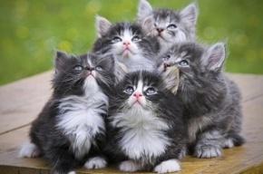 Живодеры демонстративно зарезали восемь кошек на проспекте Королева