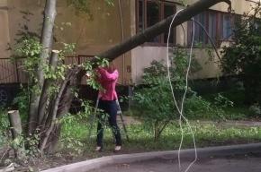 Девушка на Рихарда Зорге взяла инструмент и спилила мешавшее ей дерево