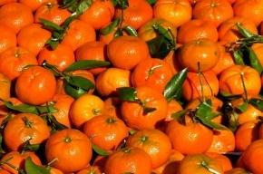 Поставки овощей и фруктов из Египта приостановлены