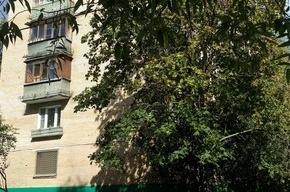 Крысы прогрызли труп неизвестного мужчины на Пулковском шоссе