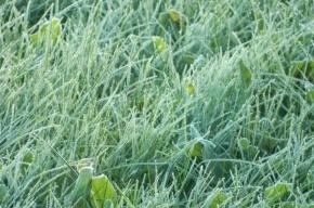 Заморозки ожидаются в Ленобласти