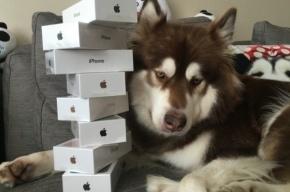 Сын миллионера из Китая купил своей собаке восемь iPhone 7