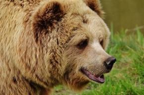 Полицейский застрелил агрессивного медведя у школы в Приамурье
