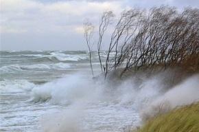 МЧС предупредило петербуржцев о штормовом ветре на выходные