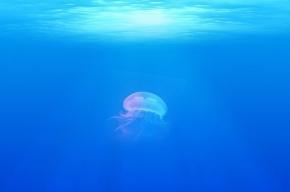 Ученые: почти 40% Черного моря стали непригодными для жизни