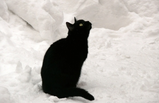 Первый снег выпадет в Петербурге во вторник