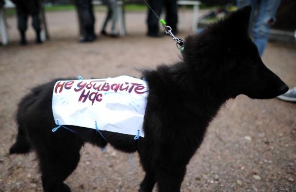 Петербуржцам расскажут, как спасти зверей от живодеров