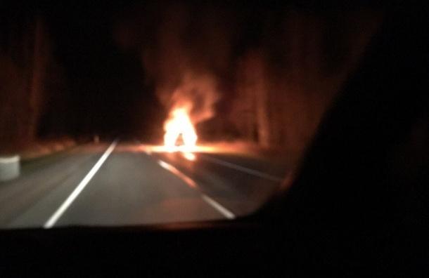 Иномарка сгорела после столкновения на Дороге жизни с кабаном