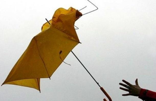 МЧС: сильный ветер в Петербурге будет до четверга