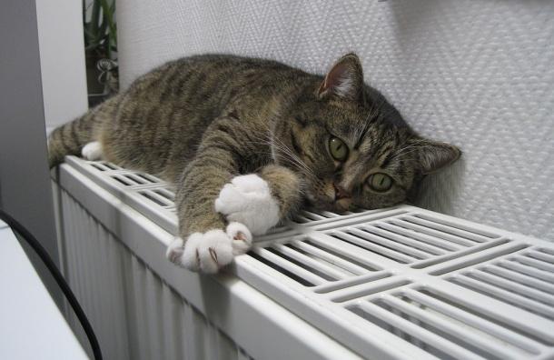 «Теплосеть» предупреждает о возможном ограничении подачи горячей воды на Васильевском