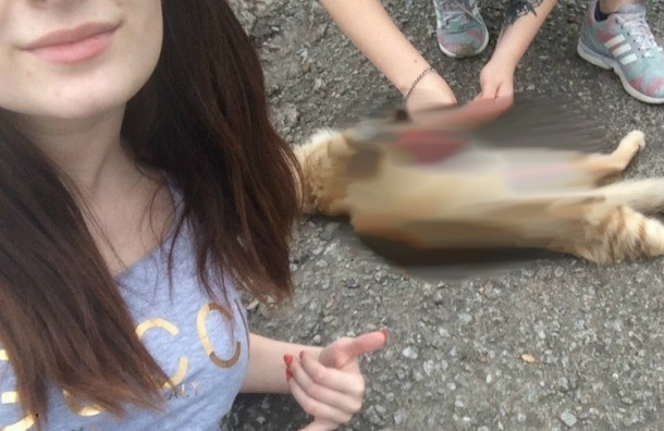 Студенток из Хабаровска подозревают в издевательствах над животными