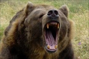 Медведь вырвался из клетки и загрыз мужчину в Пензенской области