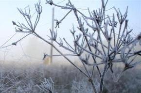 МЧС обещает заморозки в Ленобласти