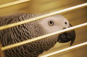 Житель Кувейта едва не оказался в тюрьме из-за болтливого попугая