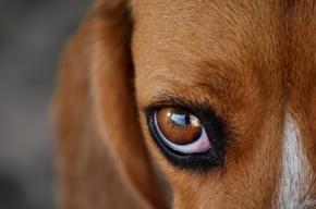 Роском следит за сайтами, пропагандирующими насилие над животными