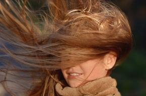 Северный ветер продолжит шалить в Петербурге