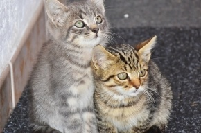 Ученые выяснили, как кошки продлевают жизнь хозяевам