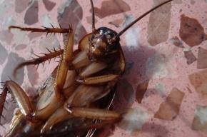 Ученые рассказали о миссии тараканов на Земле