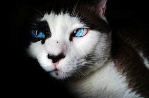 Ученые узнали, почему кошки вызывают аллергию