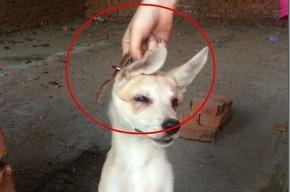Уголовное дело полиция возбудила после публикации фото издевательств над животными