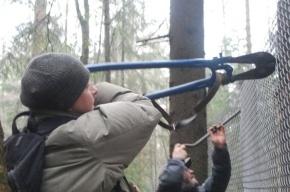Активисты выйдут на митинг против захвата лесов в Токсово