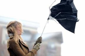 Северный ветер принесет в Петербург дожди