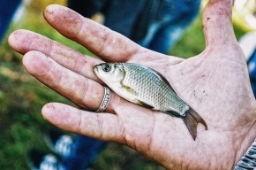 Ученые: древние рыбы «подарили» людям пять пальцев