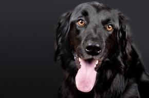 Ученые выяснили, почему собаки любят людей