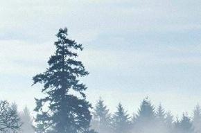Ленобласть накроет туман в четверг