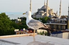 Археологи нашли в Стамбуле древнейшие антидепрессанты