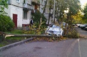 Элитную машину чуть не придавило дерево на Гагарина