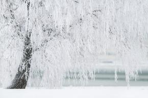 Мокрый снег пойдет сегодня в Ленобласти