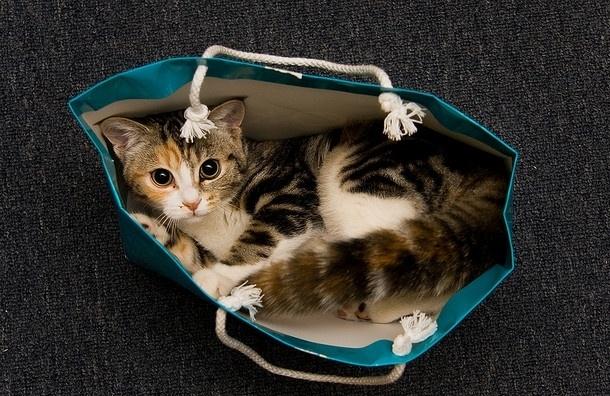 Девушку с котом ищут в Петербурге