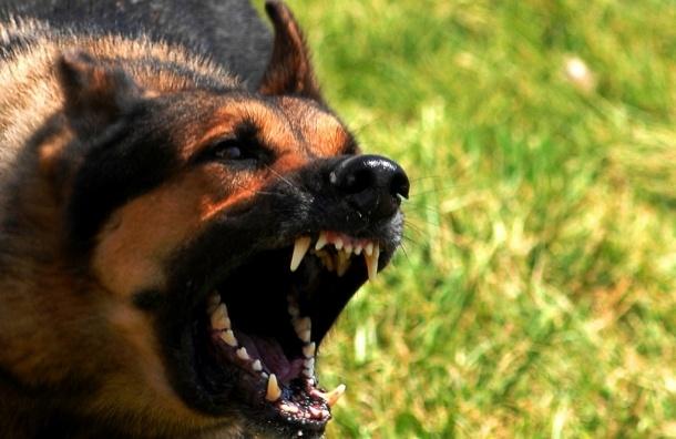 ВПетербурге задержали хозяек разъяренных собак, искусавших семилетнюю девочку