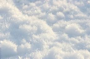 Метель со снегом ждет Петербург в последнее воскресенье ноября