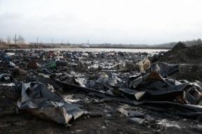 Власти просят включить «Красный бор» в реестр вредных объектов