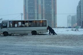 Пассажиры вызволяли из снежного плена маршрутку в Шушарах