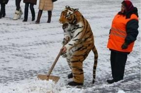 Правила благоустройства Петербурга разработали в Смольном