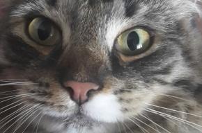 Кошка в Москве напала на семью с ребенком: есть пострадавшие
