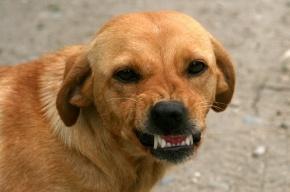 Псы растерзали ребенка в Челябинской области