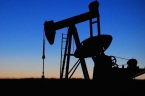 Цены на нефть обрушились на фоне новостей о выборах в США