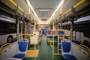 Ночные автобусы в Петербурге берут паузу до Нового года