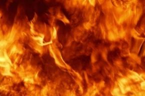 Mercedes сгорел в Невском районе
