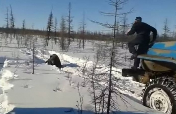 Руководитель Минприроды: «Расправа над медведем вЯкутии— уголовное преступление»