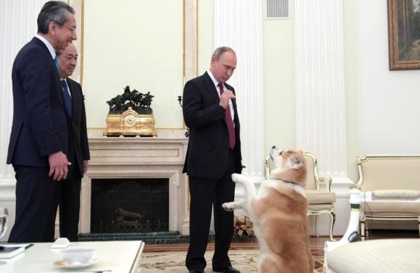Путин о своей собаке Юмэ: «Она строгая собака»