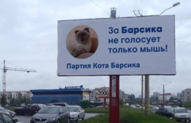 Против Навального в президентской гонке выступит кот Барсик