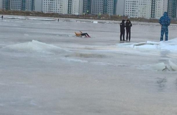 Тело пропавшей неделю назад студентки нашли вмерзшим в лед в Петербурге